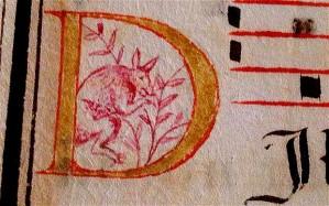 Manuscript Kangaroo