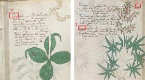voynich-manuscript-finding-proper-nouns